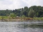 HRV_RCB_Wanderfahrt_Hattingen_(103)